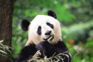 TUI Tours Once in a Lifetime China Panda