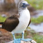 Natural Wonders of the Galapagos Islands from TUI Tours