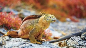 TUI Tours Natural Wonders of the Galapagos